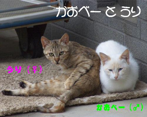 so-net623045.jpg