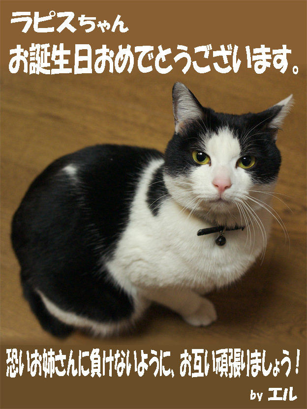so-net6233345.jpg