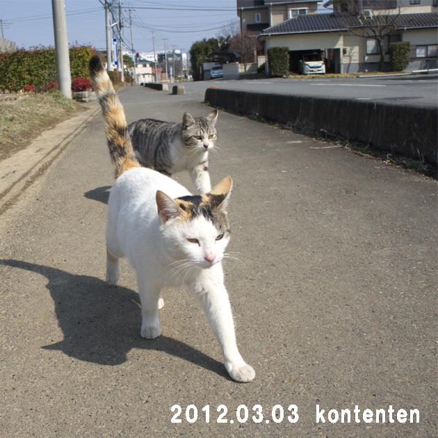 so-net6233662.jpg
