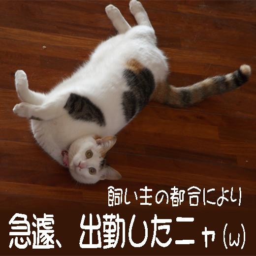 so-net6232748.jpg