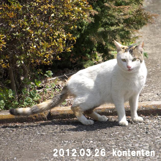 so-net6233663.jpg
